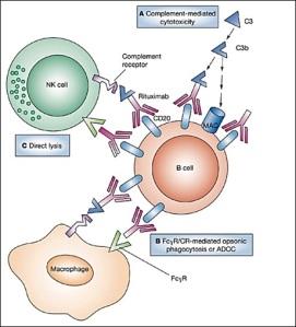 Virkningsmekanisme Til Rituximab