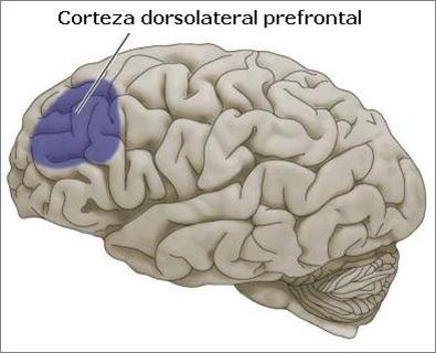 Un nuevo estudio prueba que la Fibromiálgia tiene bases biológicas (1/2)