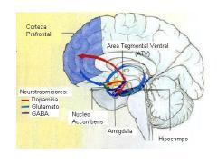 Cerebro area AVT