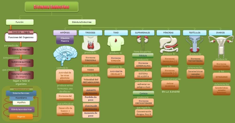 Los disruptores endocrinos como fuentes de SSQM y otras enfermedades de SSC (1/3)